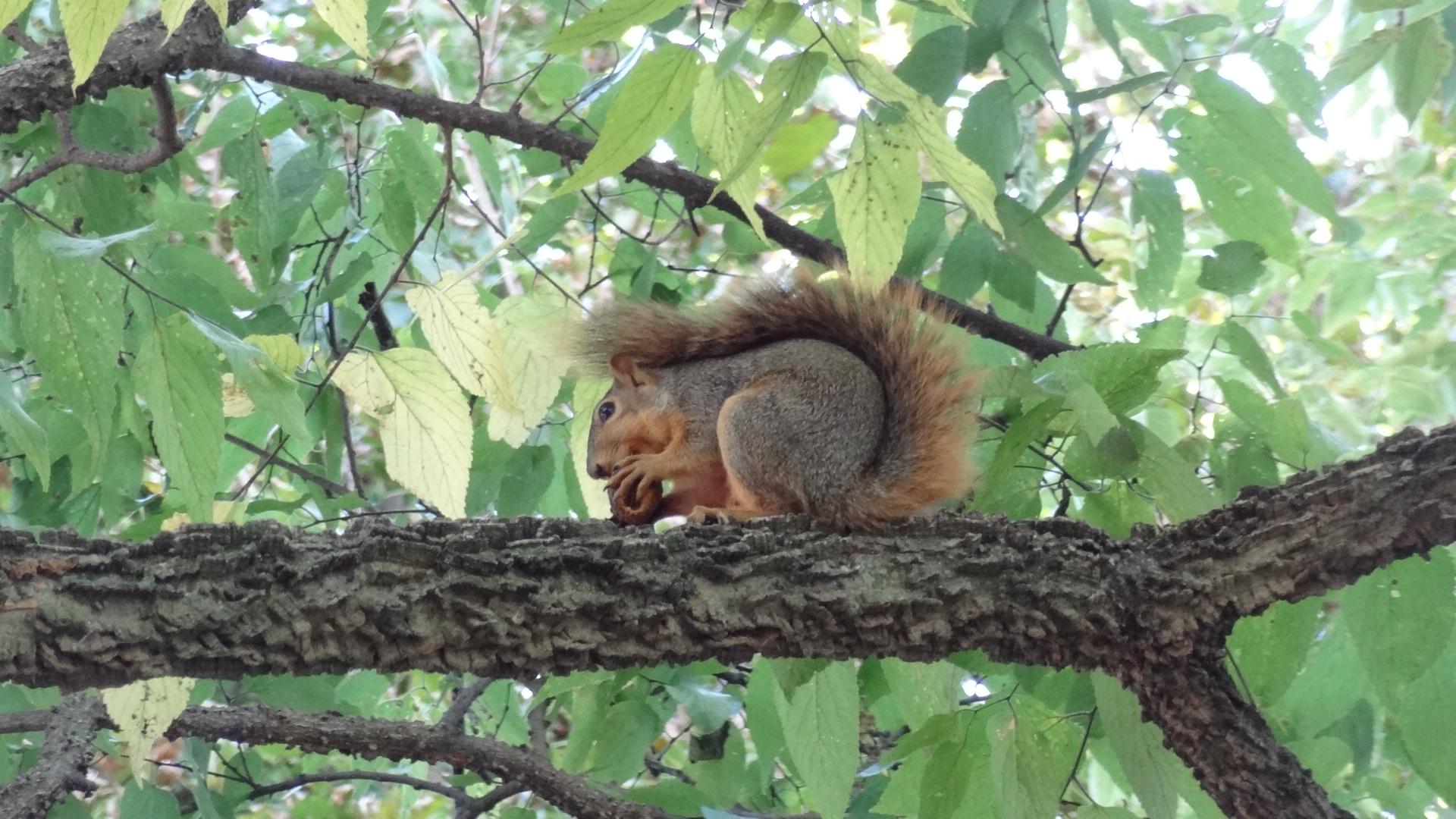 Ann Arbor Eichhörnchen